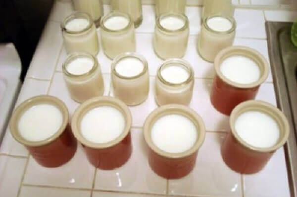 Chế hỗn hợp trên vào các hộp đựng sữa chua