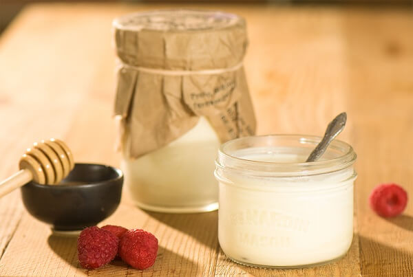 Sữa chua được tạo ra bởi vi khuẩn lên men của sữa.