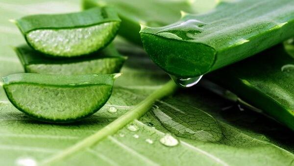 Nha đam được xem là một nguyên liệu vô cùng hữu ích trong việc nấu ăn, duy trì sức khỏe