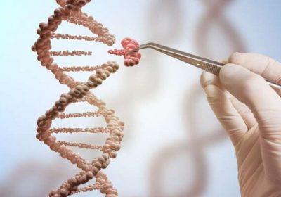Tính chất đột biến gen là gì, gồm những dạng nào và ví dụ?