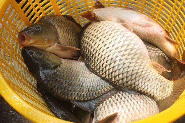4 nhóm người không nên ăn cá chép