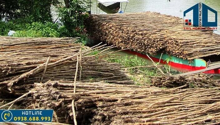 Cây cừ tràm và công dụng làm tinh dầu tràm từ cây tràm