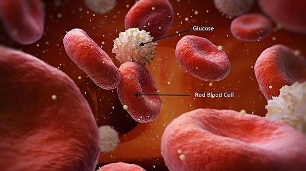 Glucose là một loại đường đơn và đồng thời cũng là một gluxit tiêu biểu.
