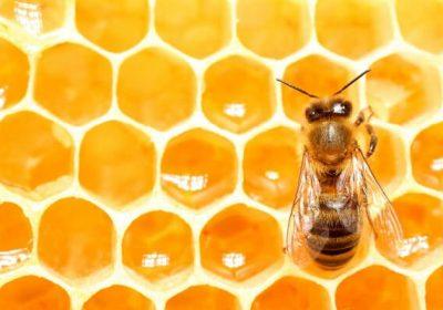 Người bị tiểu đường có uống được mật ong không, tiểu đường ăn bắp được không?