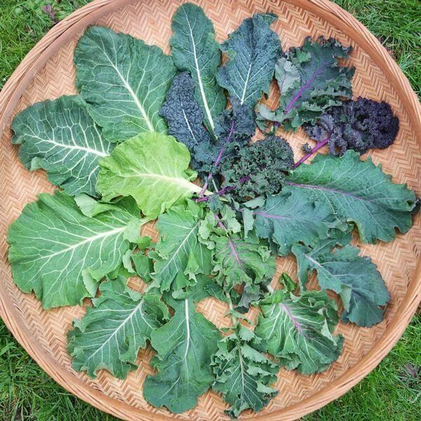 Rau xanh - thực phẩm chứa nhiều kẽm