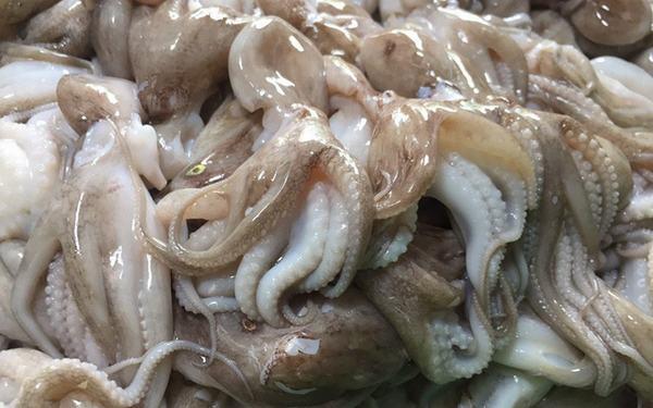 8 món ngon từ bạch tuộc dễ chế biến, bạch tuộc làm gì ngon nhất?