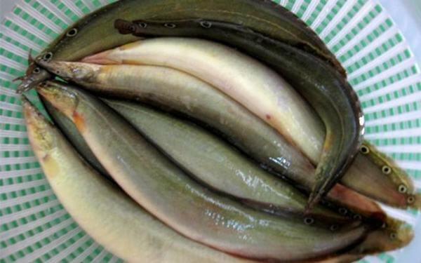 Những món ngon từ cá chạch, cá chạch làm gì ngon nhất?