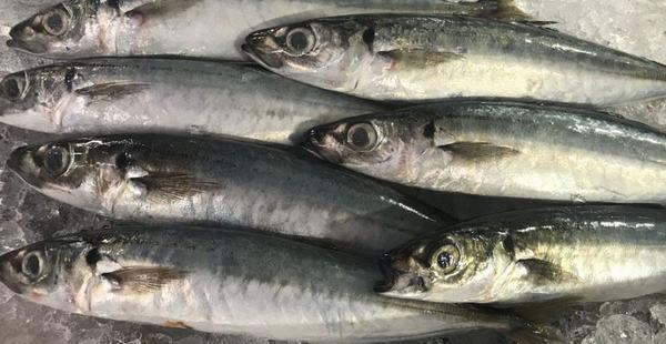 Một số món ngon từ cá nục đơn giản dễ chế biến ngon cơm gia đình
