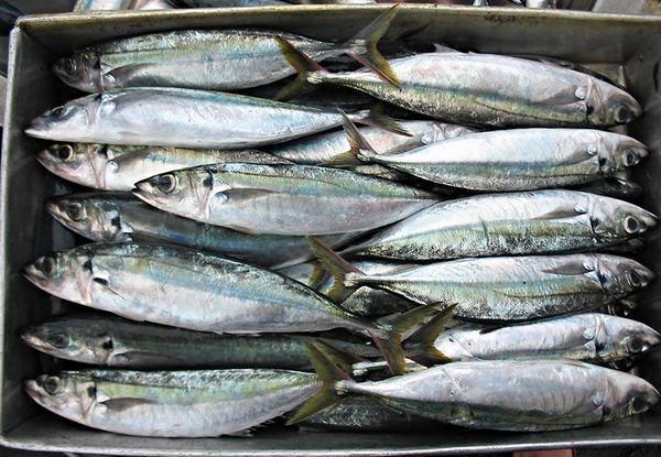 Cách chọn cá nục biển tươi ngon