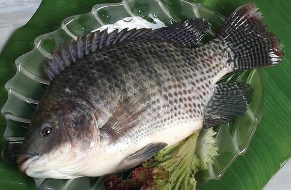 Danh sách món ngon từ cá rô phi, cá rô phi nấu món gì ngon nhất?