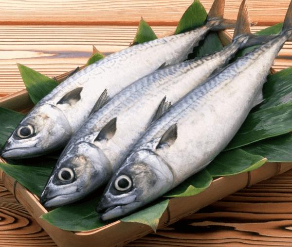 Thực đơn các món ngon chế biến từ cá thu, cá thu Nhật Bản ngon cơm gia đình