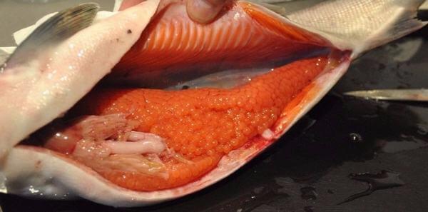 Giá trị dinh dưỡng và tác dụng của trứng cá đến sức khỏe