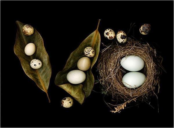 Các món ngon từ trứng cút, trứng cút lộn dễ làm ngon cơm gia đình