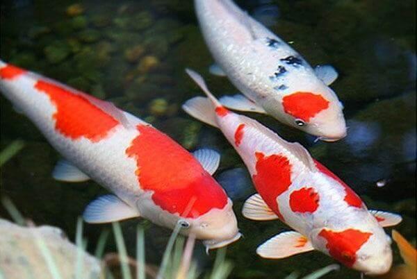 Những giấc mơ thấy cá liên quan đến những con số nào?