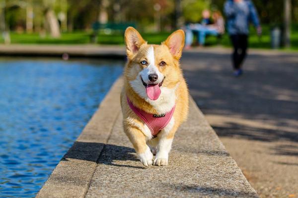 Nằm mơ thấy chó liên quan đến những con số gì?
