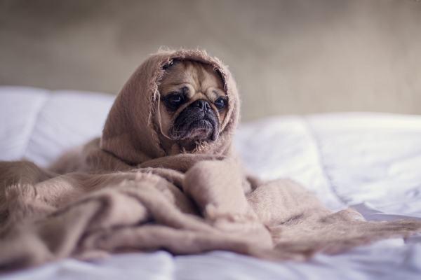Ý nghĩa của việc nằm mơ thấy chó như thế nào?