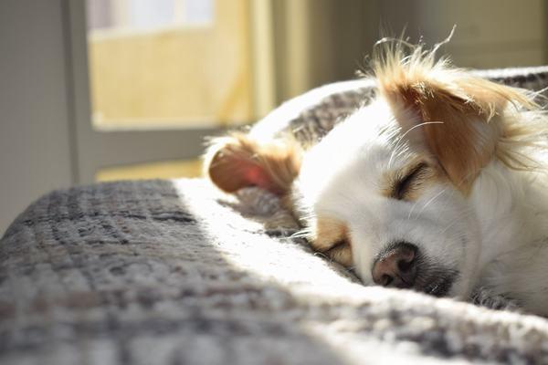 Giải mã các giấc mơ thấy chó theo màu sắc