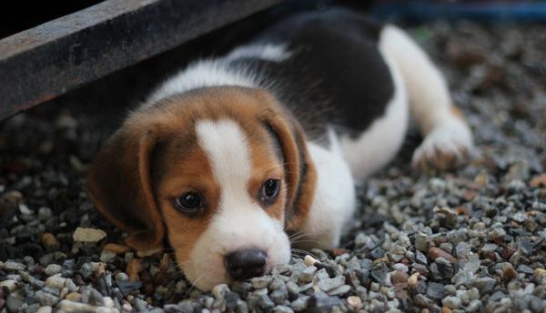 Giải mã giấc mơ thấy chó cắn, bị chó rượt đuổi mang những điềm báo gì, lành hay dữ?