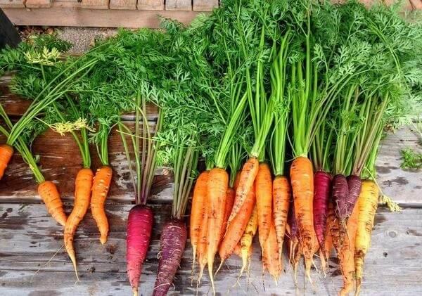 Giải độc, thanh lọc cơ thể bằng nước ép cà rốt và mật ong nguyên chất, vừa đơn giản vừa hiệu quả