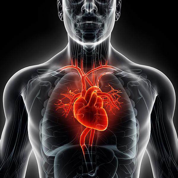 Bảng mẫu lập kế hoạch chăm sóc bệnh nhân suy tim cấp độ 2 3 4 bảng chi tiết, chăm sóc giảm nhẹ bệnh suy tim