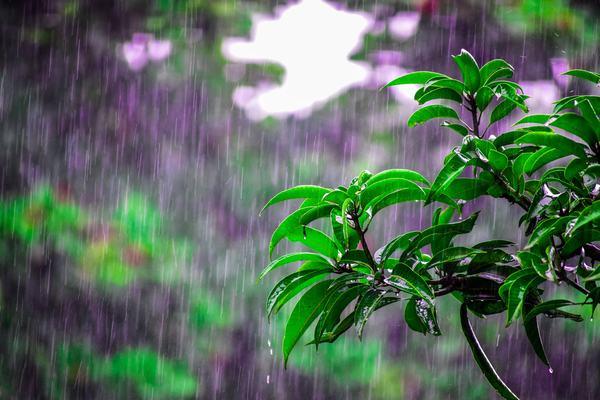 Mơ thấy những giấc mơ xuân, mưa phùn