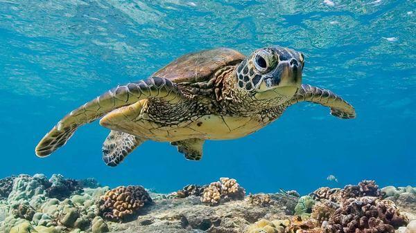 Chiêm bao mơ thấy rùa mang những ý nghĩa hay điềm báo gì cho tương lai?