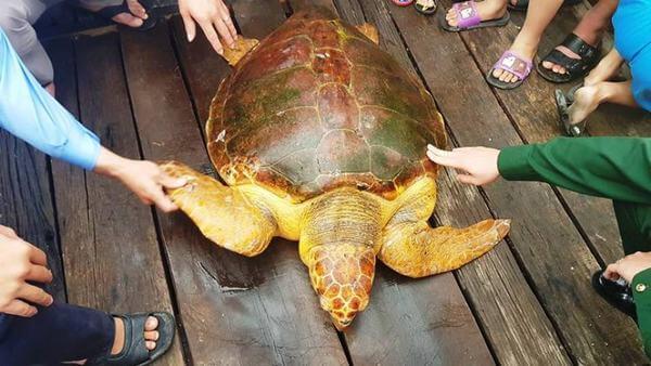 Ngủ mơ thấy rùa vàng bò khổng lồ bò lên giường