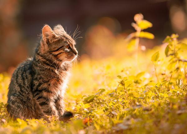 Nằm mơ thấy mèo đánh con gì?