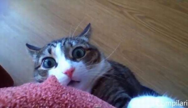 Sinh năm 2023 là tuổi con Mèo (Quý Mão). Năm sinh dương lịch: Từ 22/01/2023 đến 09/02/2024.