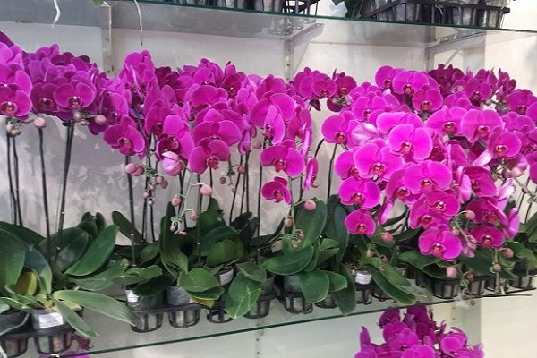 Shop bán hoa lan hồ điệp Biên Hòa với 7 lợi thế cạnh tranh tốt nhất trên thị trường