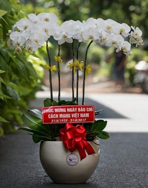 Không chỉ chú trọng về chất lượng thích hoa lan hồ điệp tại shop
