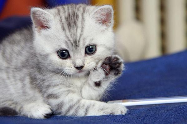Nhìn chung, cầm tinh tuổi con Mèo sinh năm 2011 tuy phải trải qua nhiều sự khó khăn