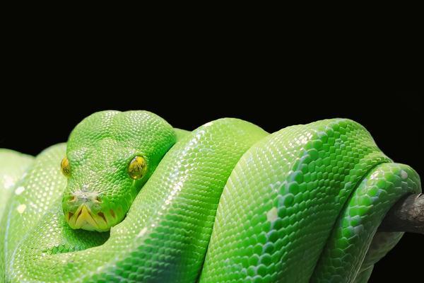 Mơ thấy 3 con rắn mang điềm lành hay điềm dữ?