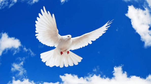 Mơ thấy chim bồ câu là điềm lành