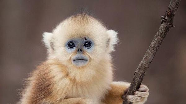 Bạn đã đọc về điềm báo khi mơ thấy con khỉ chưa?